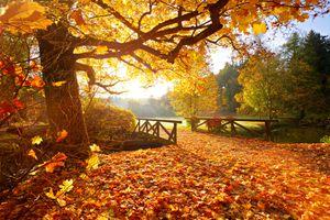 autumnal scene of a path, bridge, and field