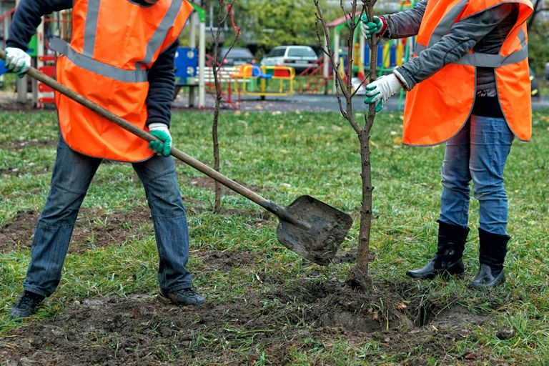 Para combatir el desempleo, India plantará 2 mil millones de árboles