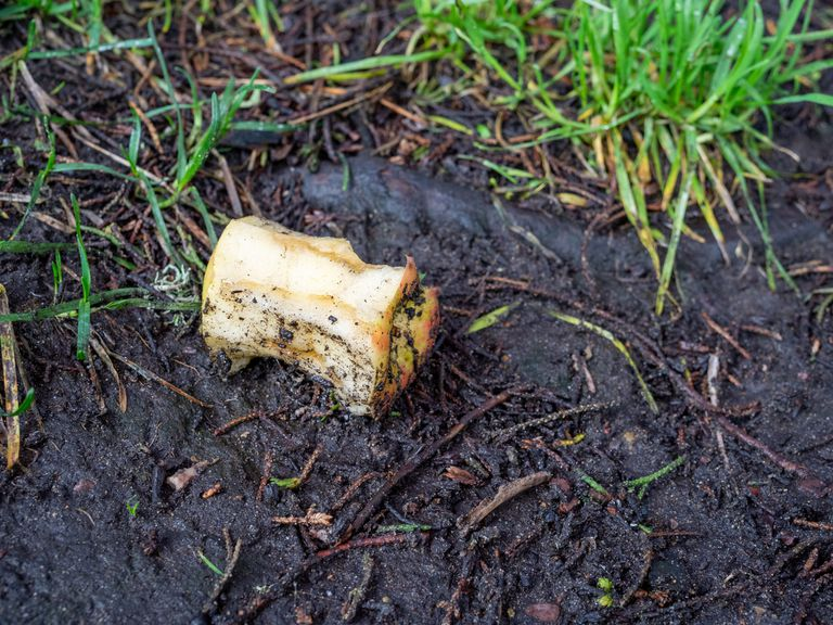 Apple core sitting in wet dirt next to grass