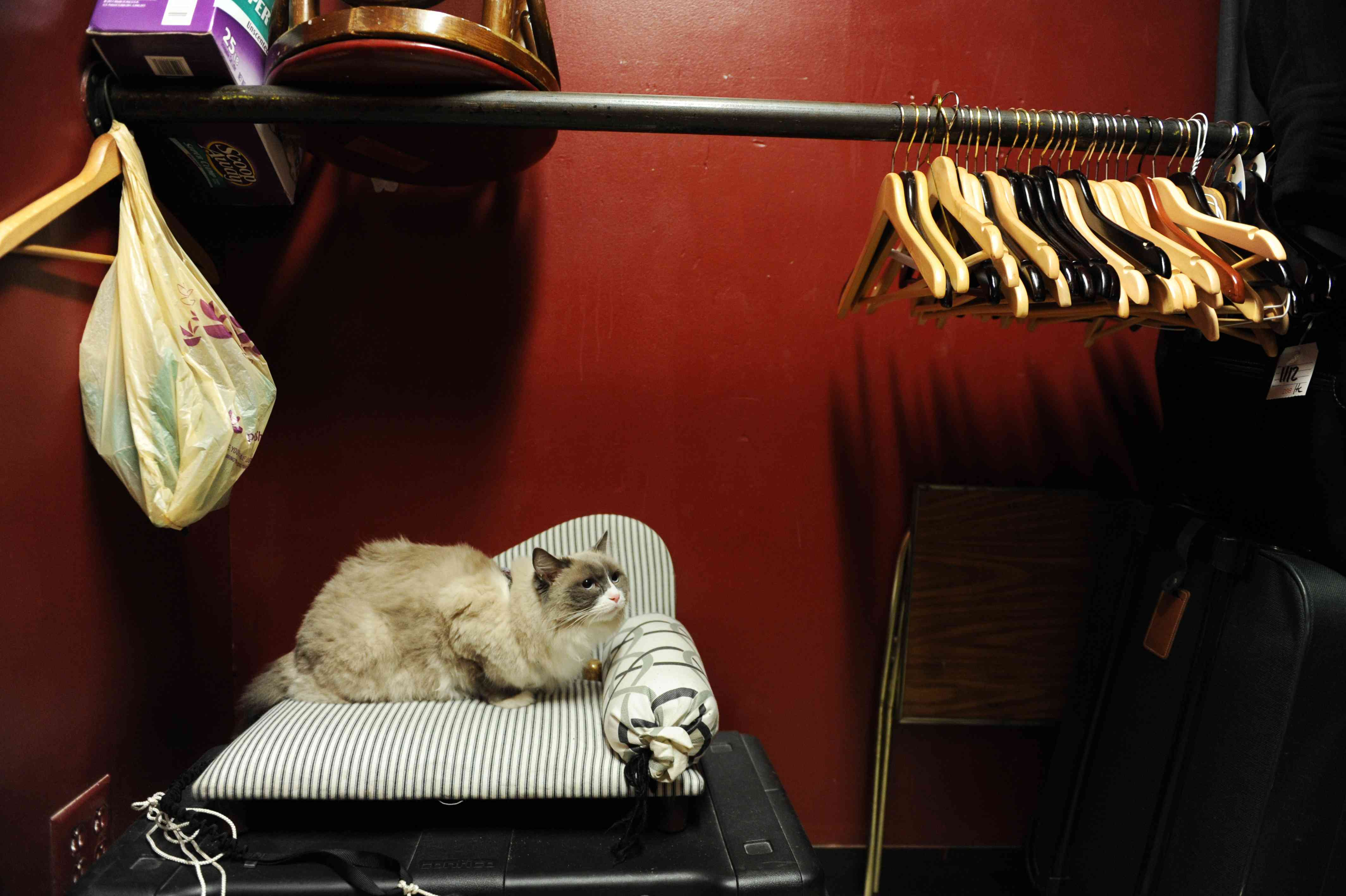 gray cat sits on bed in hotel closet