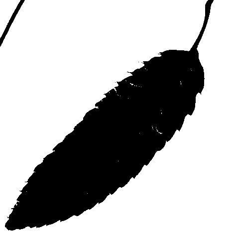 Silhouettes Sawtooth Oak Leaf