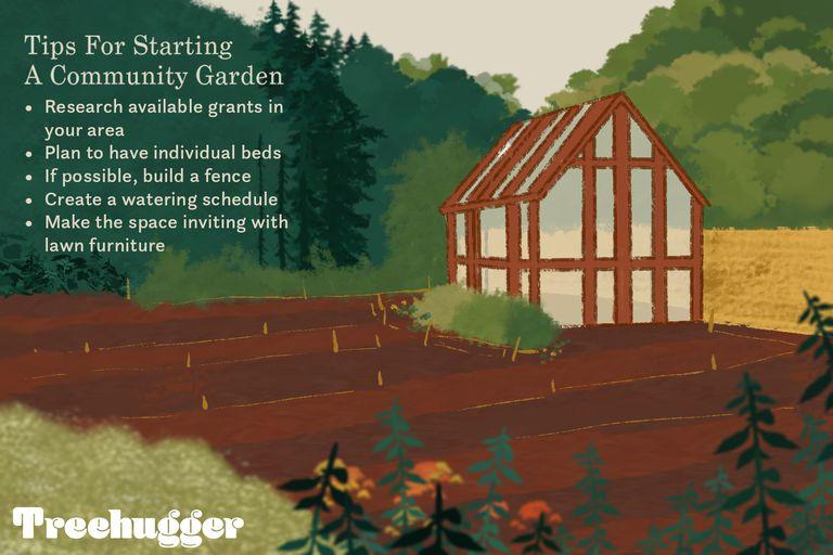 tips for starting community garden