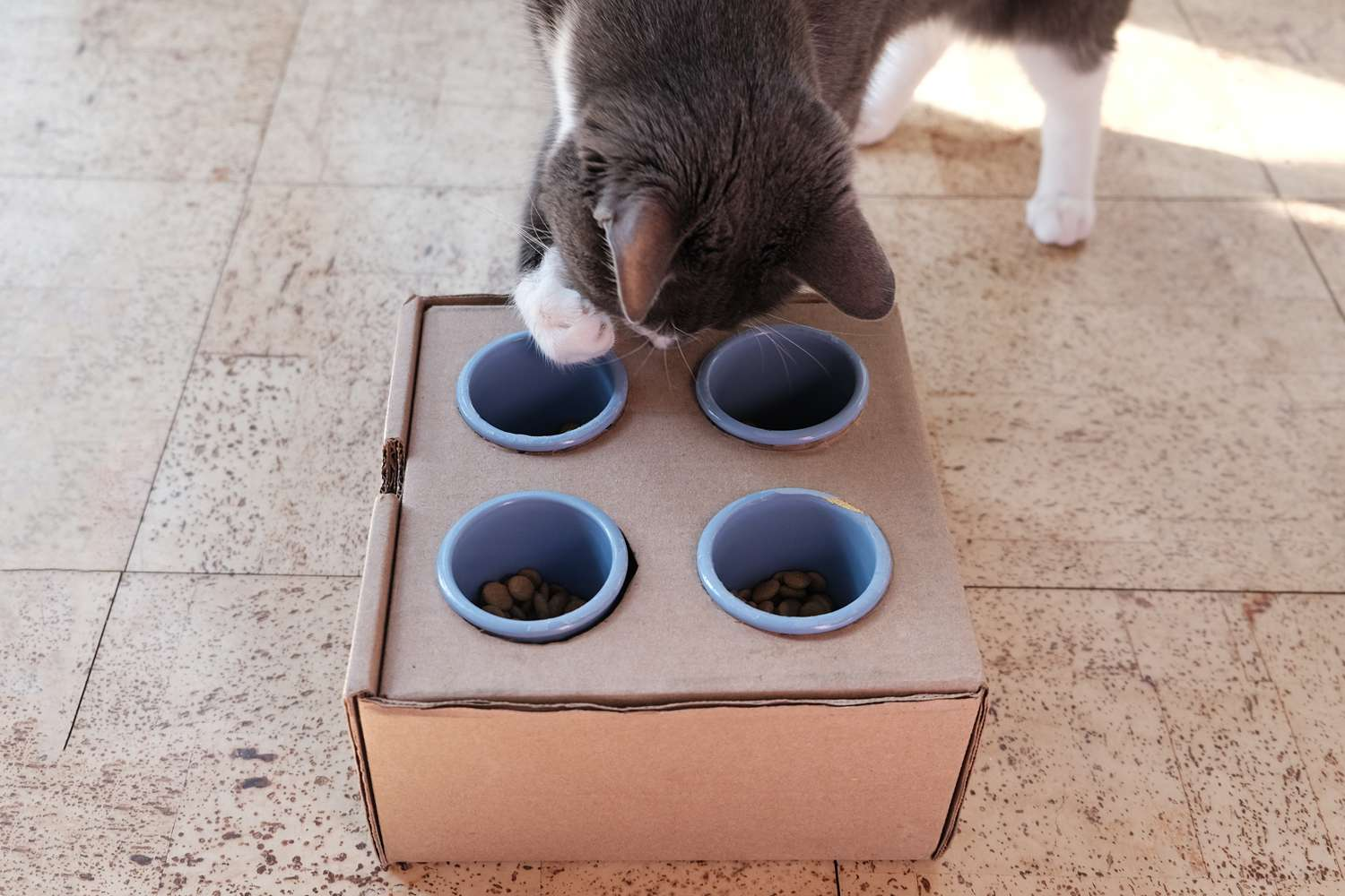 gray and white cat scoops treats with paw out of DIY feeder cardboard box