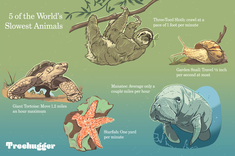 5 of the world's slowest animals