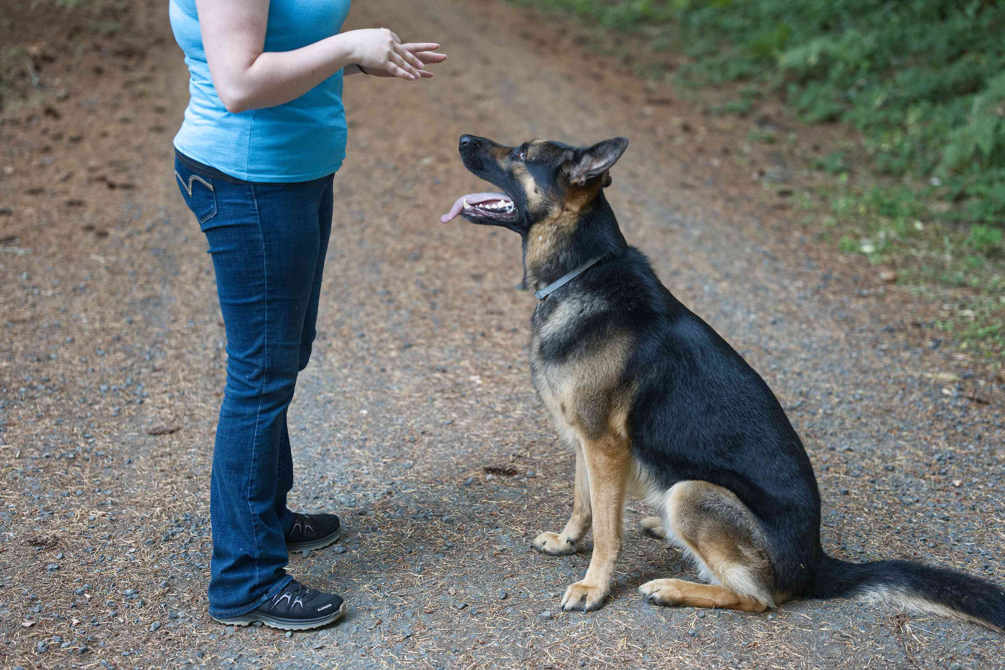 woman trains German Shepherd dog with hand movements while outside on dirt road