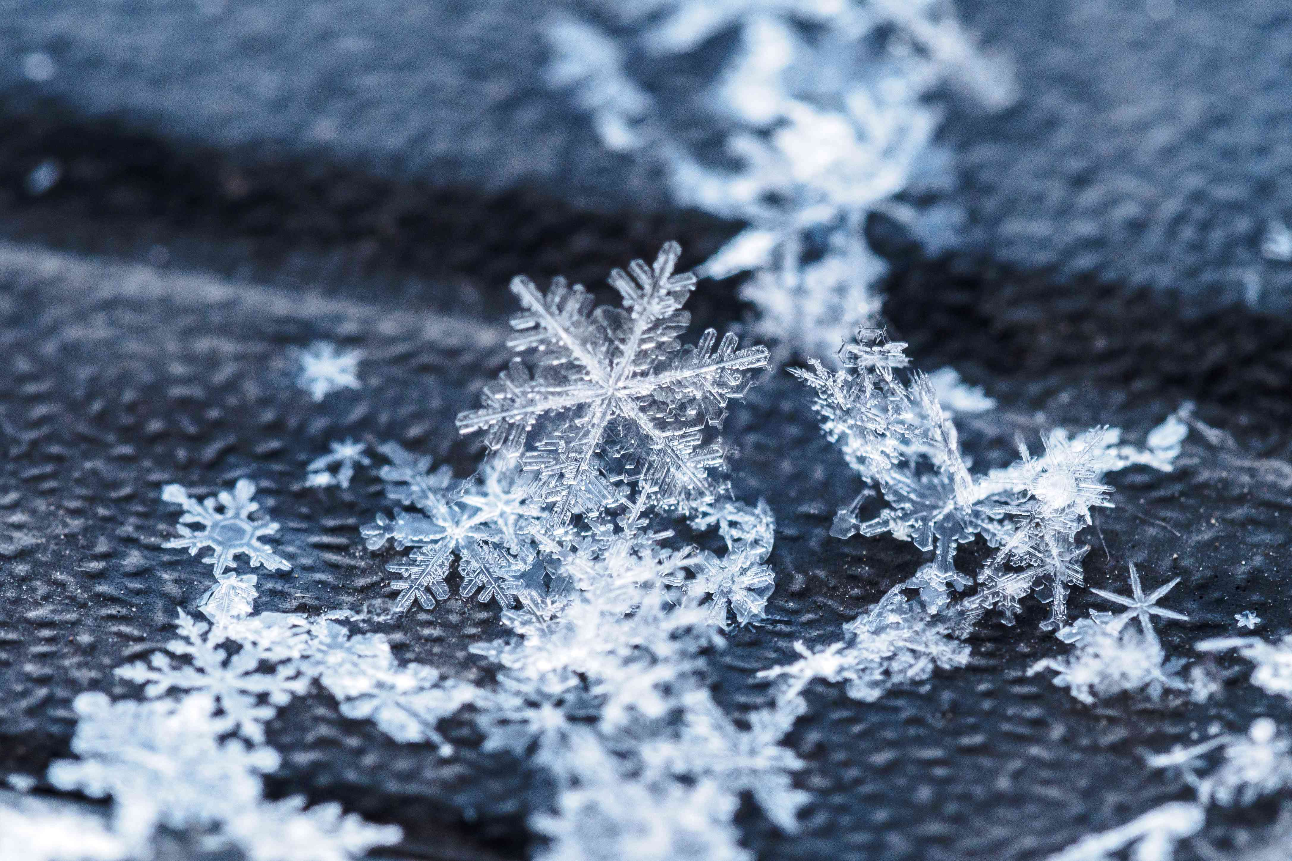 snowflakes close-up