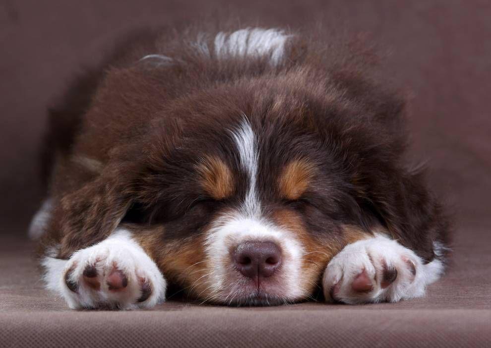 puppy asleep