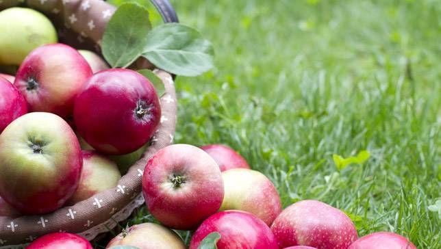 Cómo los diferentes tipos de manzanas obtuvieron sus nombres