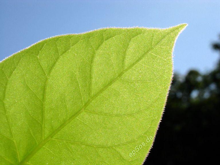 leaf forest biodiversity photo