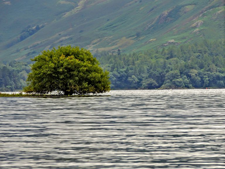 tree being overtaken by rising water and flood levels