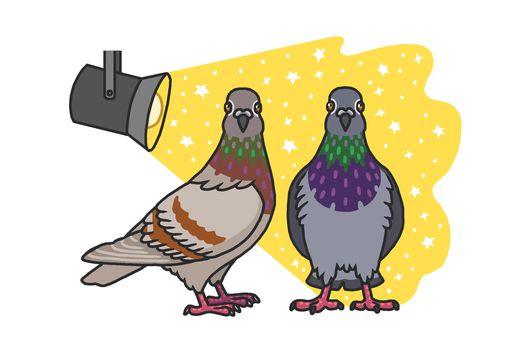 pigeons in the spotlight