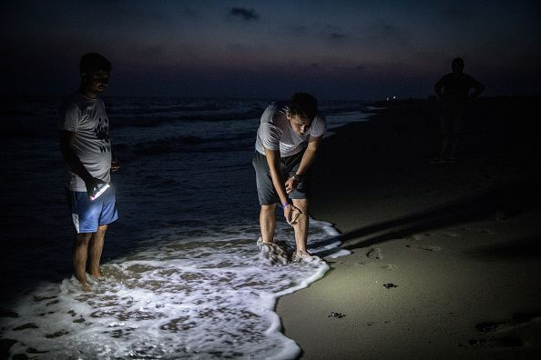 Conservation Efforts Continue To Help Stabilize Turkey's Green Turtle Population