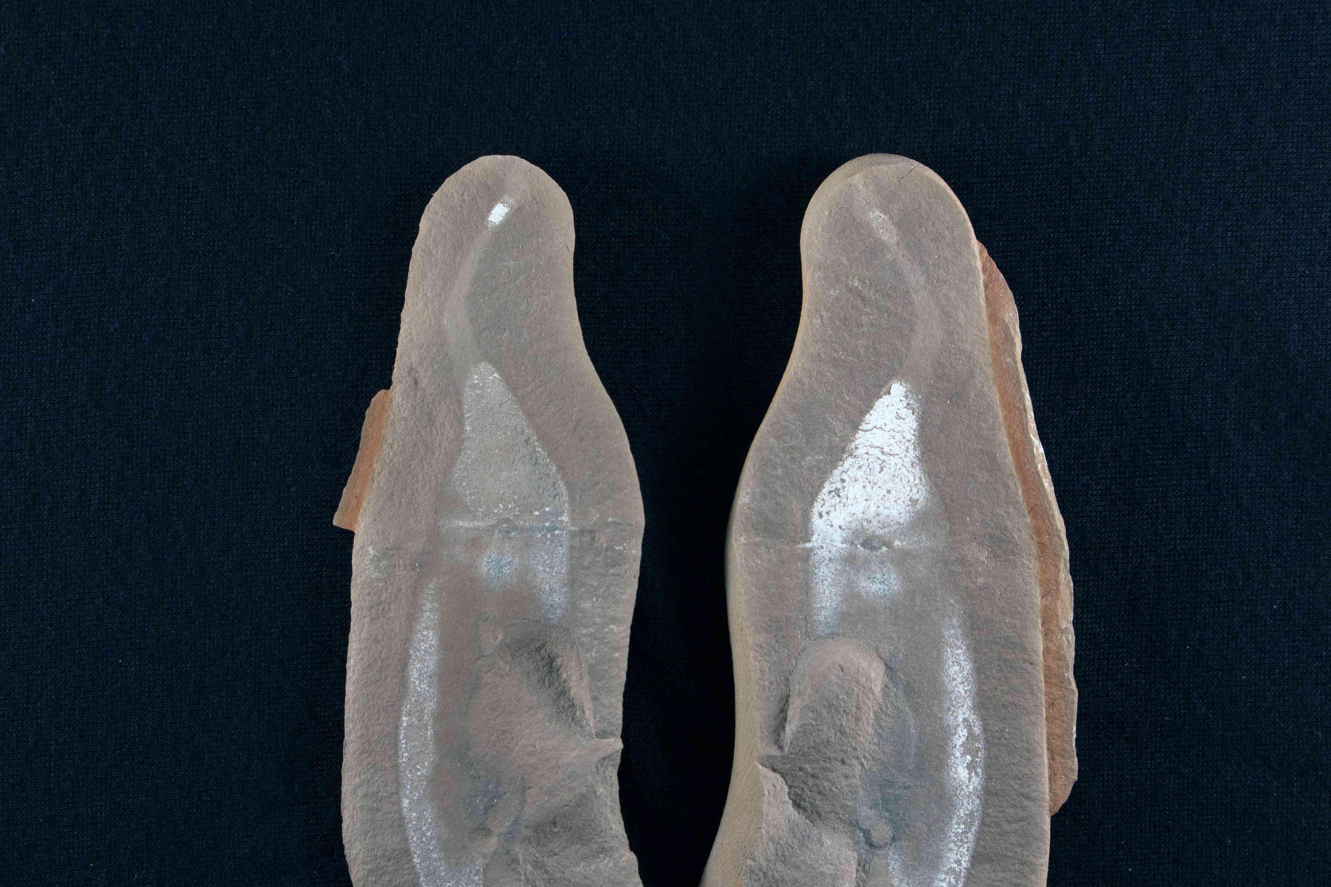 Tully monster, Tullimonstrum gregarium fossil, Mazon Creek, Illinois.