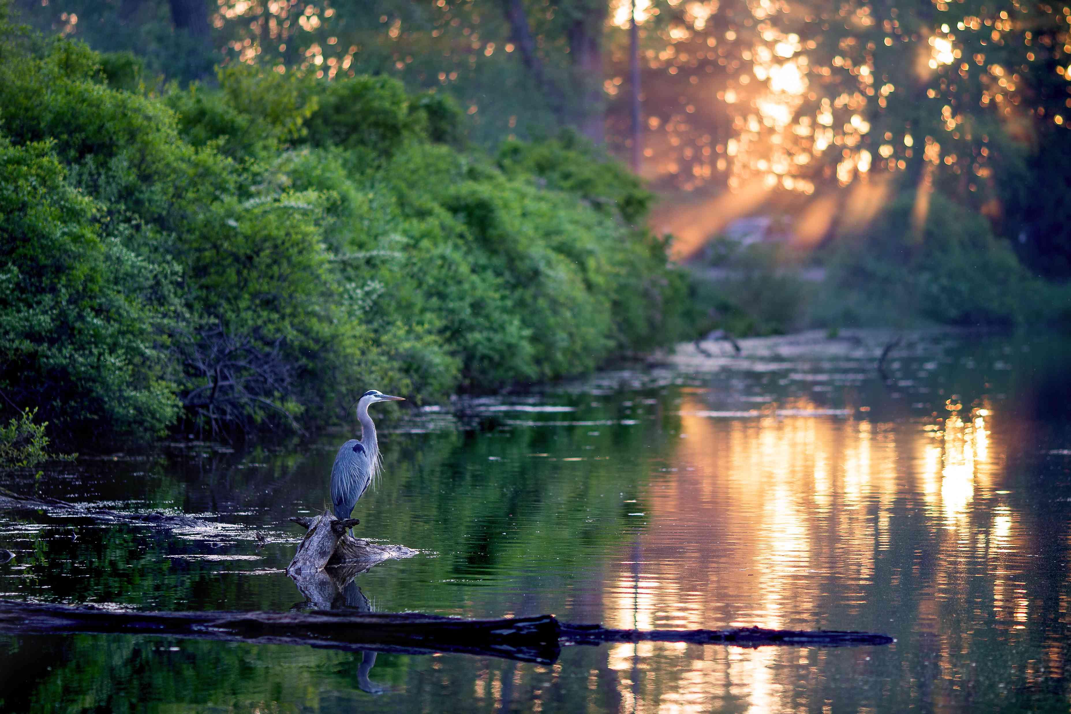 Bird on log during sunset at Lake Erie