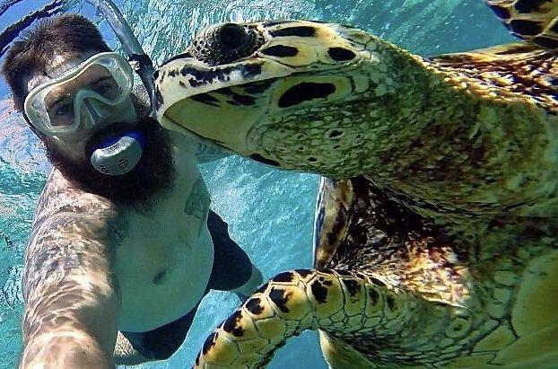 Las selfies de vida salvaje son una idea terrible