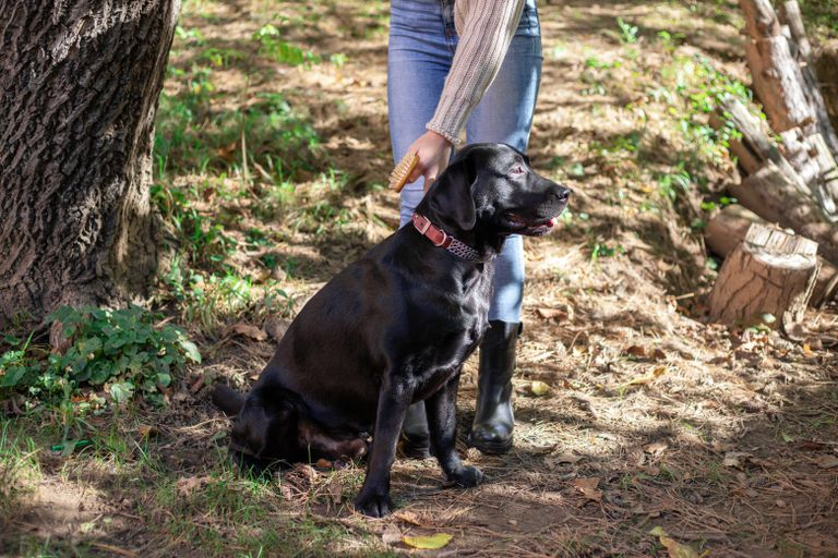 person holds black lab outside in the woods