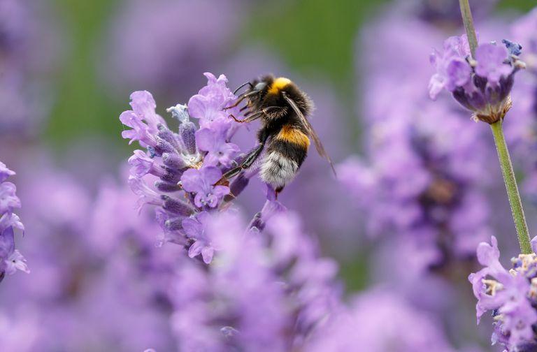 Mira cómo las abejas perciben el campo eléctrico de una flor