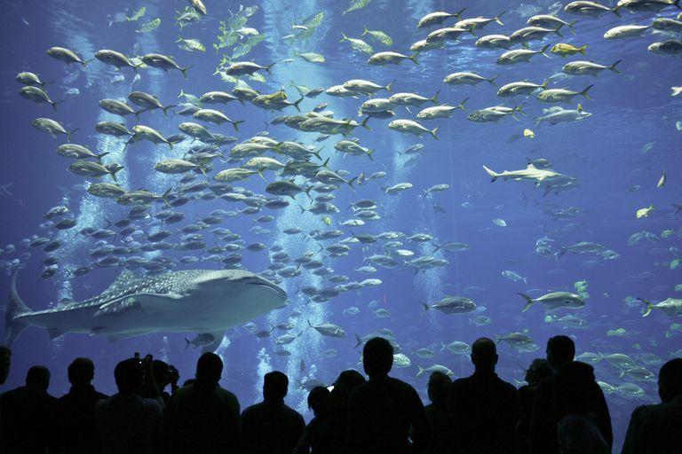 10 of the World's Most Impressive Aquariums