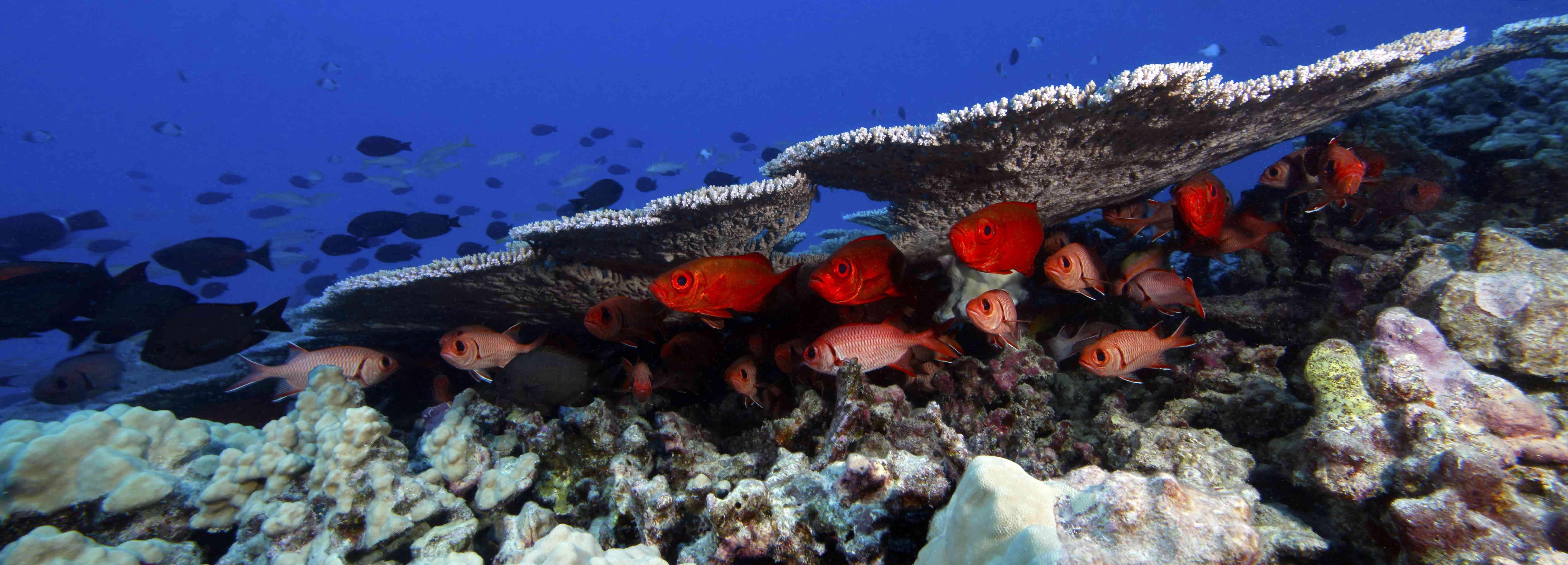 fish in Papahānaumokuākea Marine National Monument