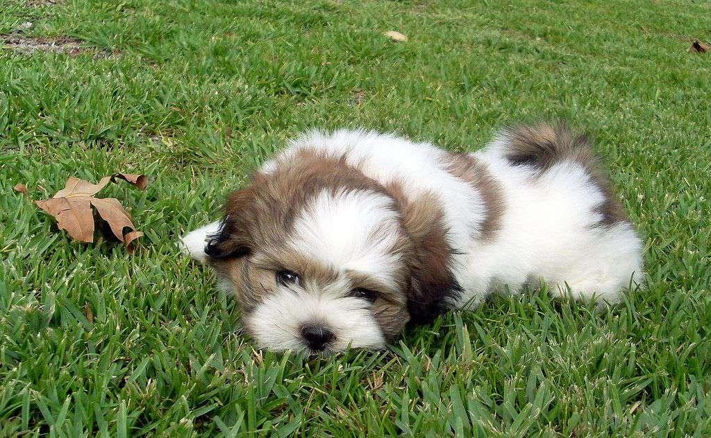 Cute puppy in grass