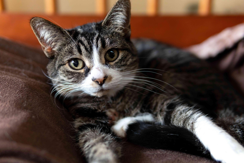 cute striped cat gazes into camera