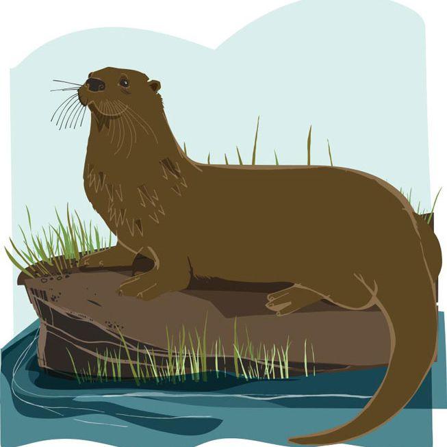 An illustration of an otter