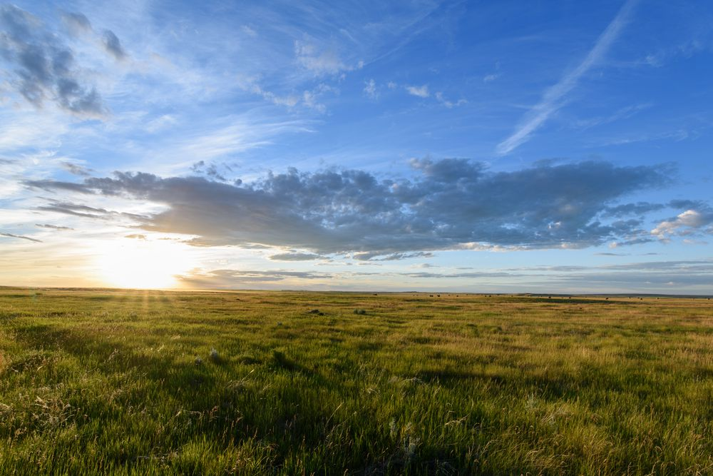 Prairie soils are the most extensive type of soil in the U.S.