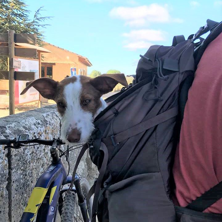 Dog being carried in a backpack