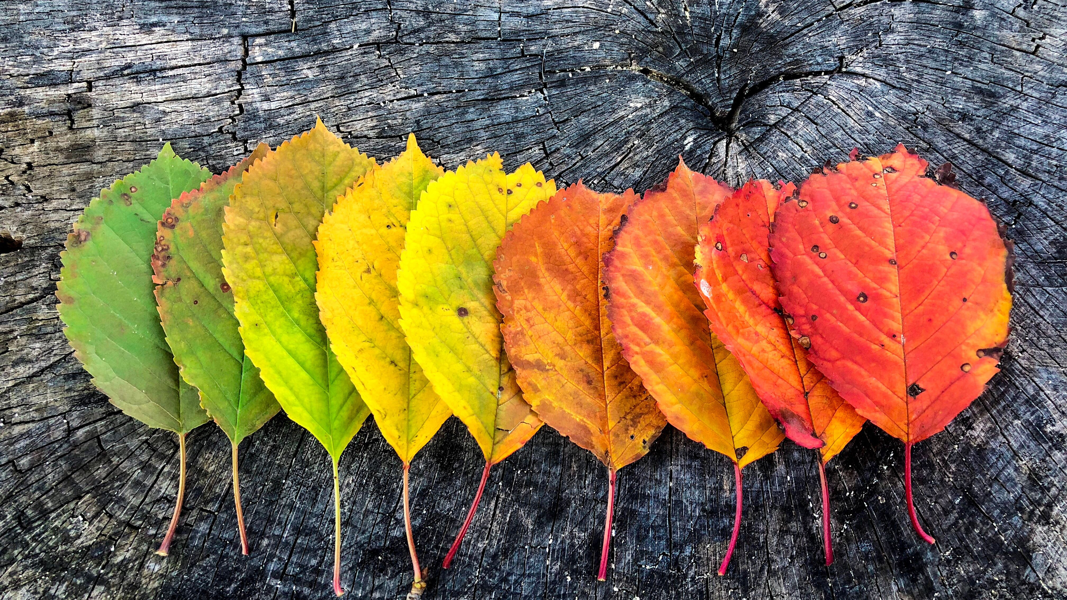 Why Do Leaves Change Color in Autumn?