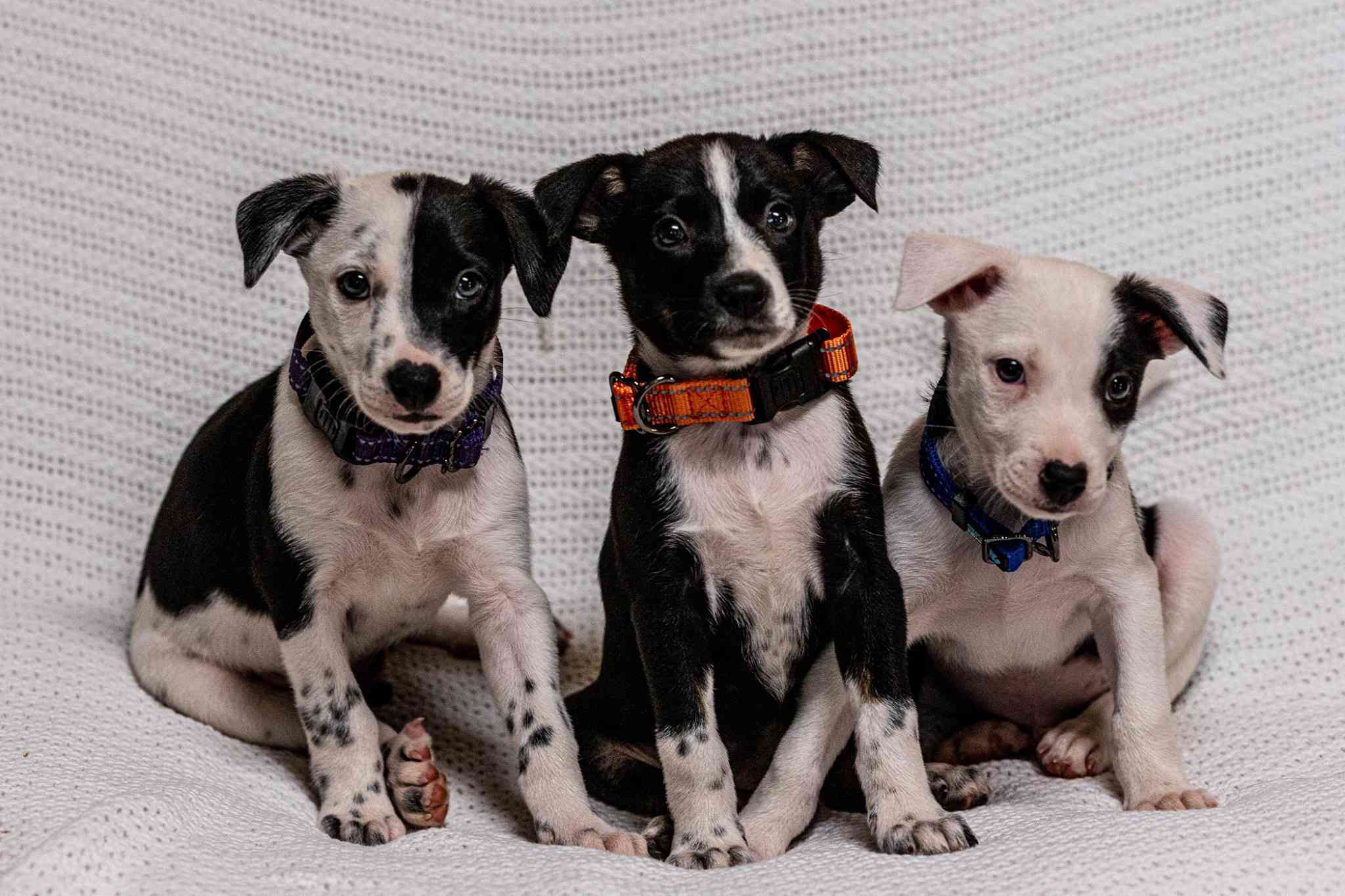puppies wearing new collars