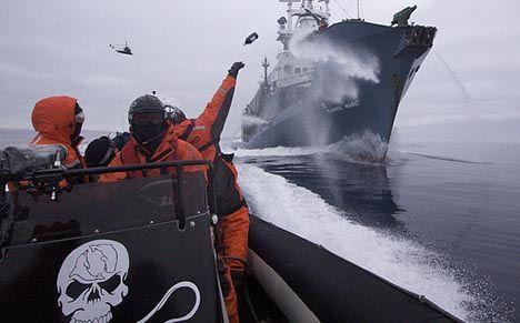 sea shepherd cut japanese catch in half photo