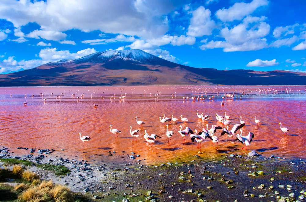 A pink-tinted lake with a snow-capped mountain in the distance