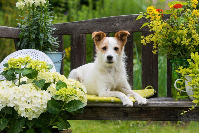 small dog on a garden bench