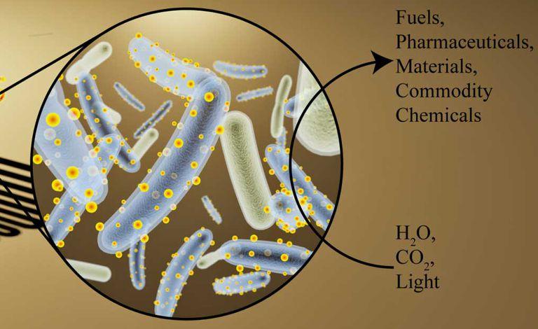 Las bacterias Cyborg convierten el dióxido de carbono en productos químicos y combustibles sin desperdicio