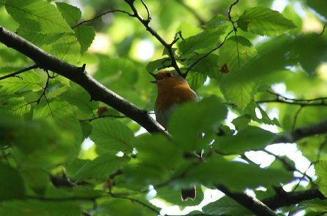bird in a tree in France