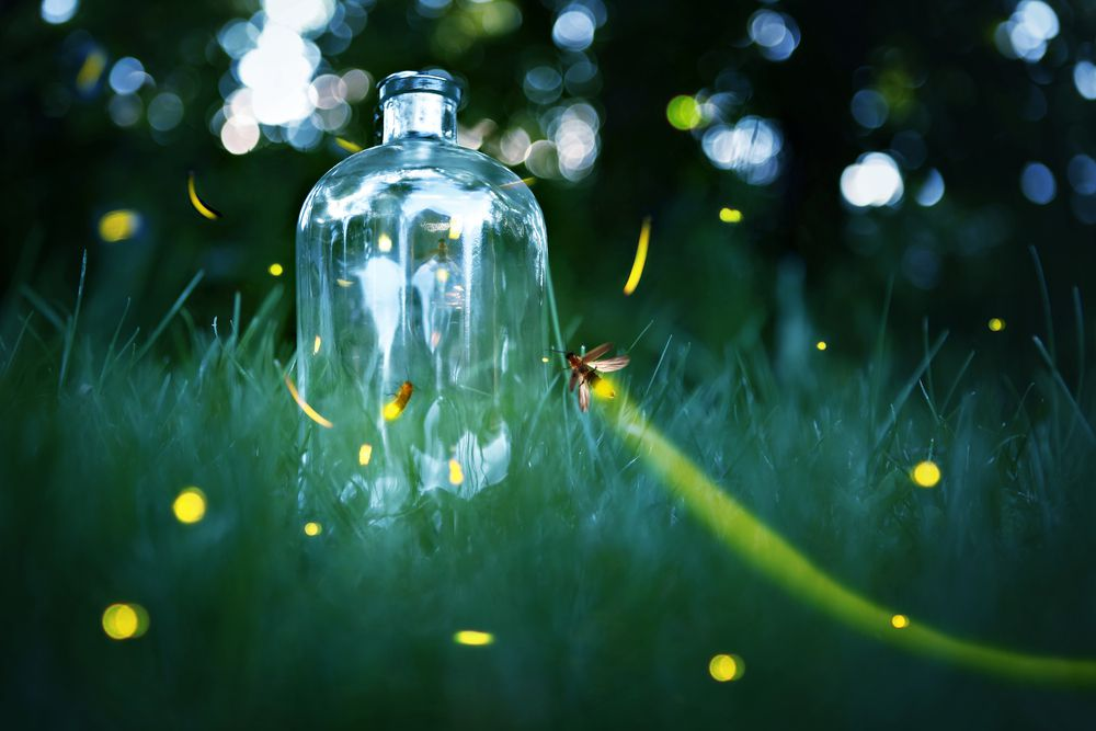 Catching a firefly in a jar is summer tradition for many kids.