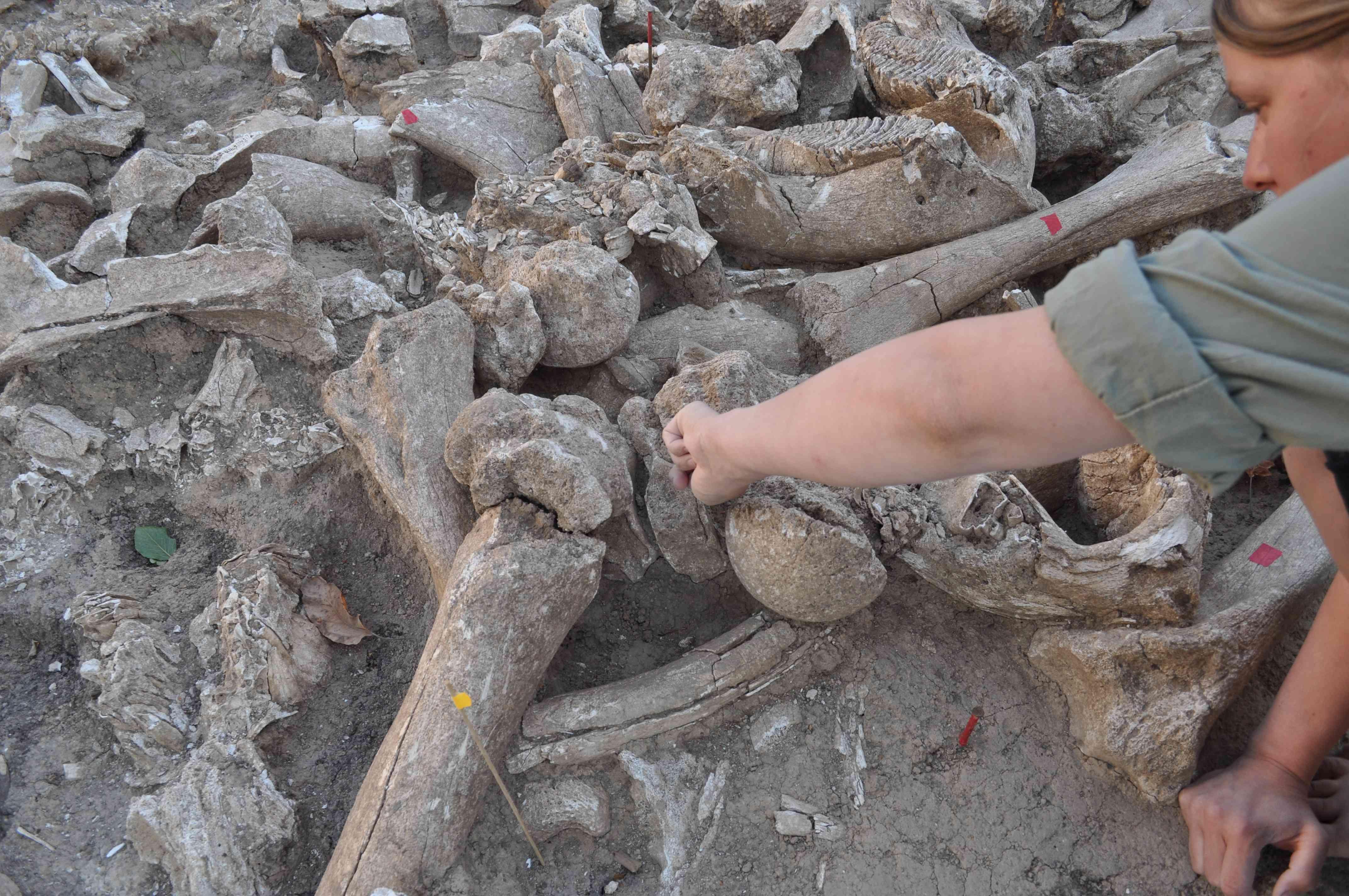 Bones found at Kostenki 11.