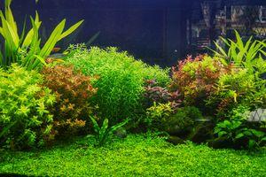 Landscape scenery in the fish tank