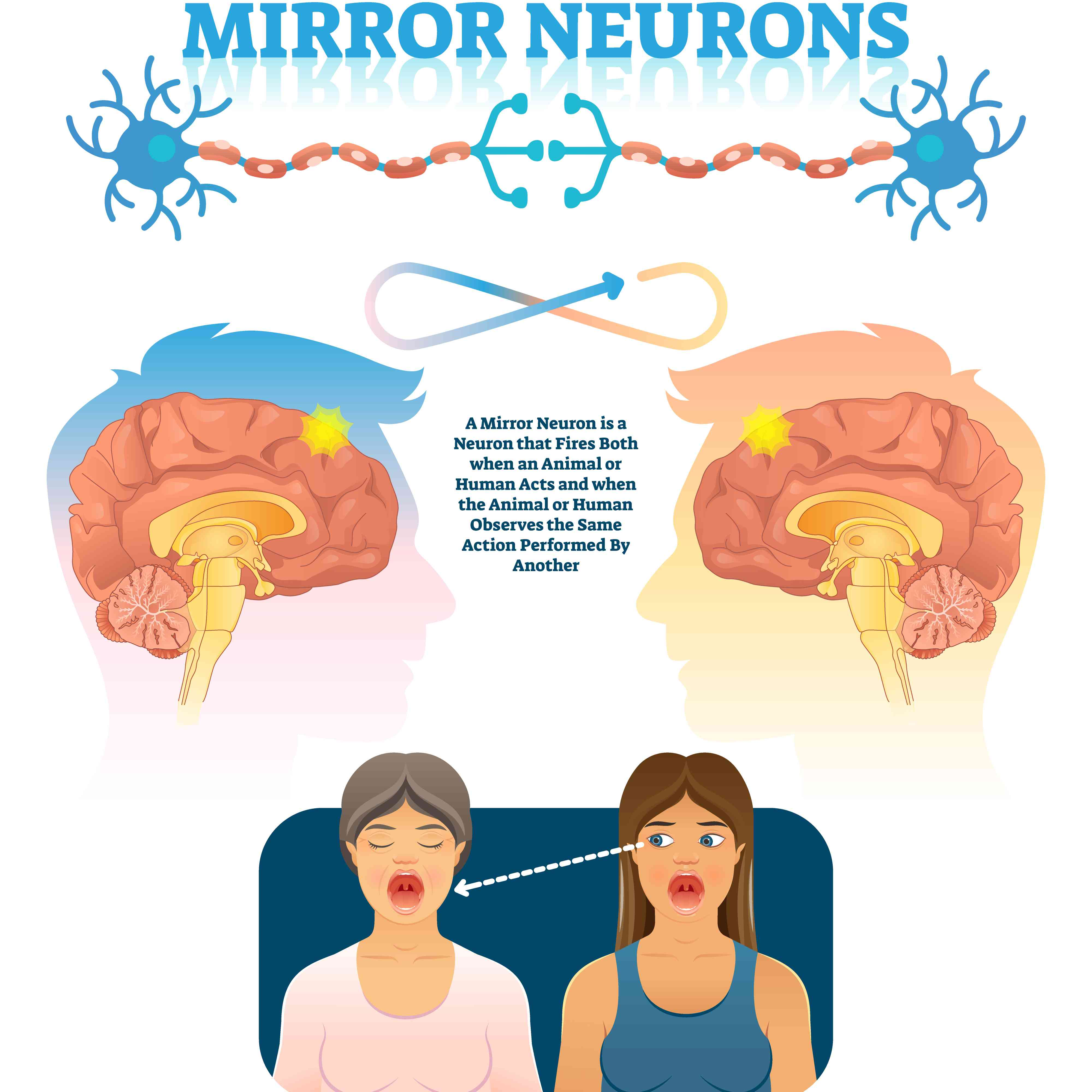 A diagram showing how mirror neurons work.