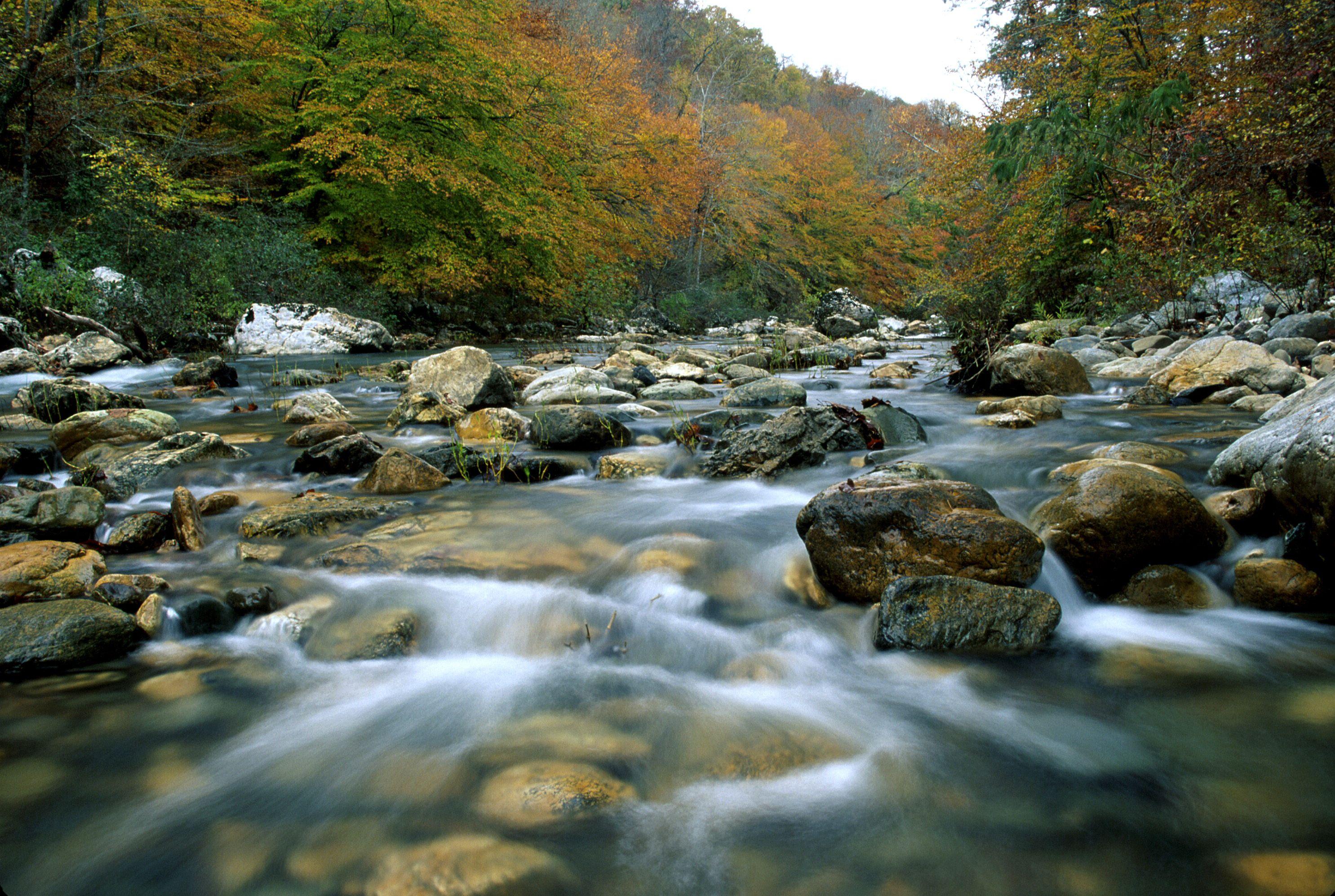 Ouachita National Forest in Arkansas
