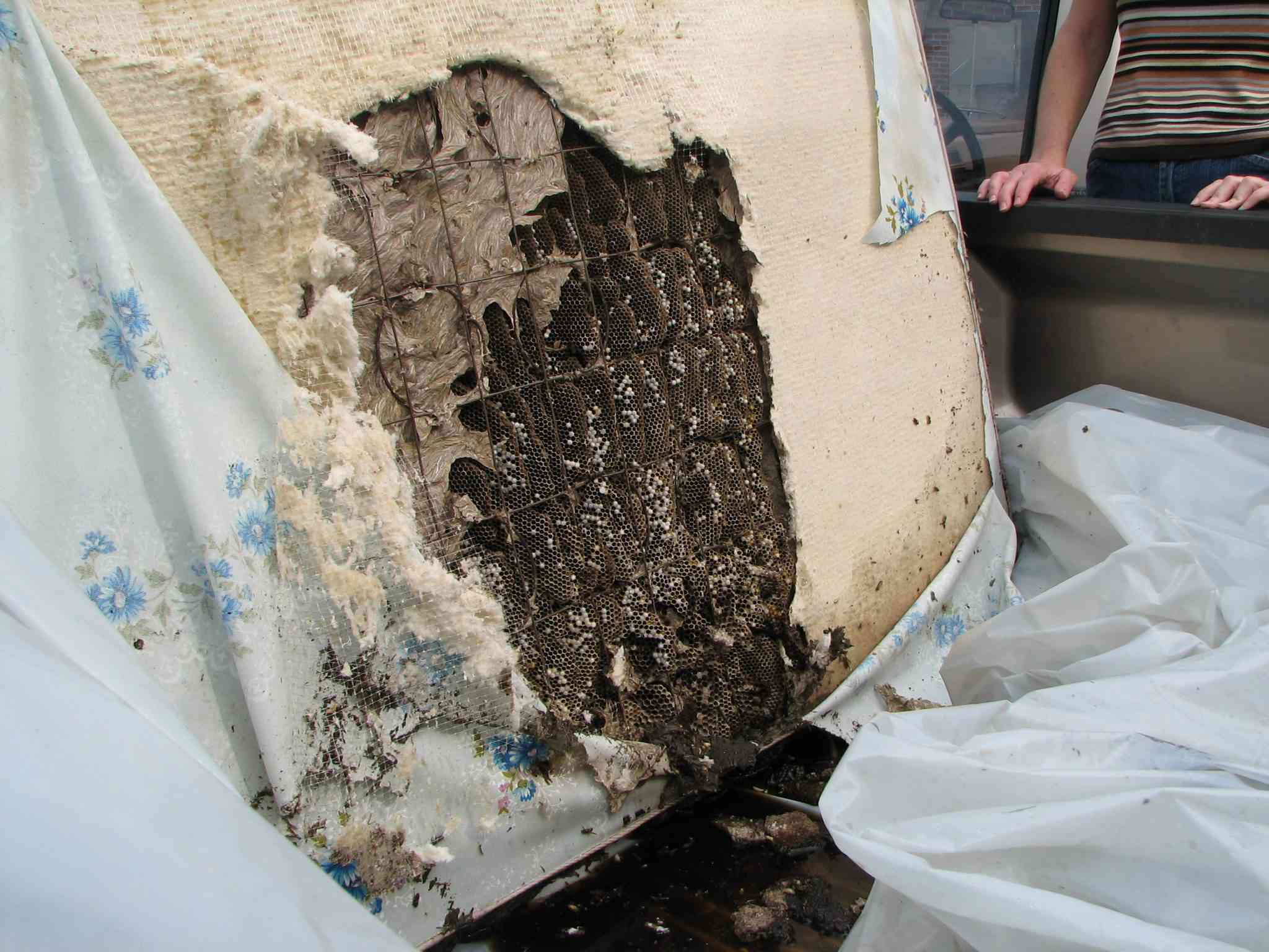 A yellow jacket nest in an discarded mattress.