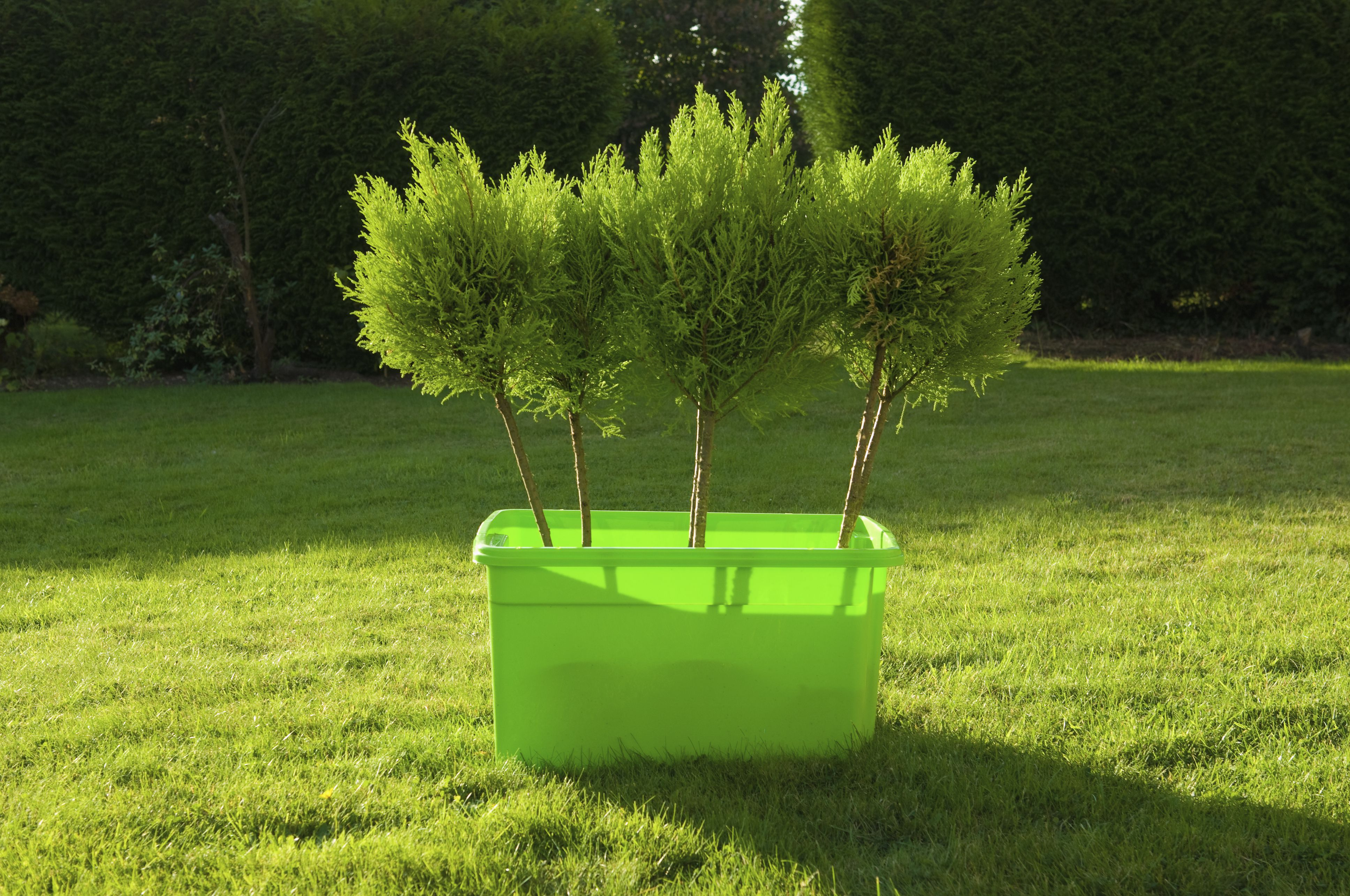 Young trees in a green plastic box standing on a lawn.
