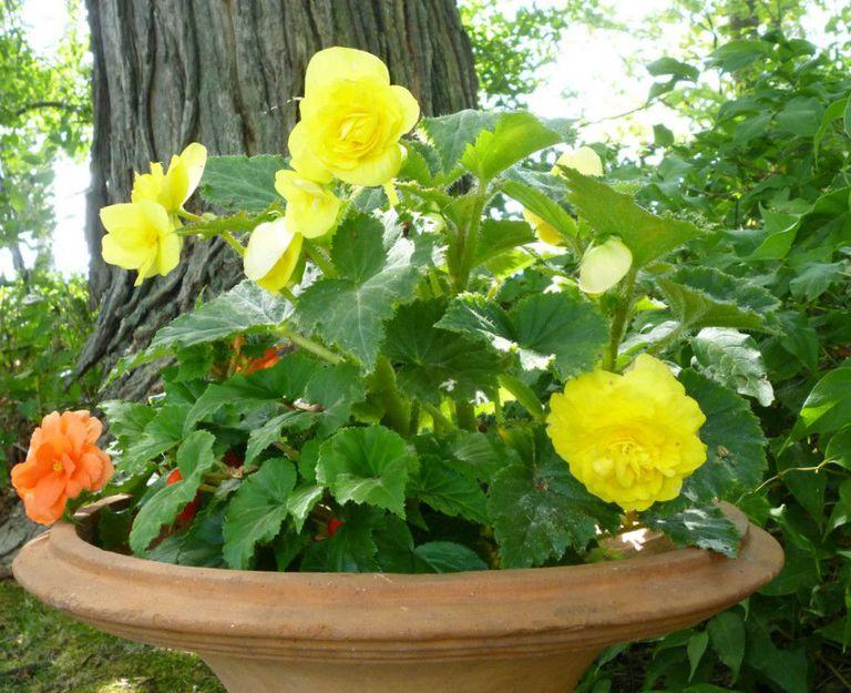 five shade plants