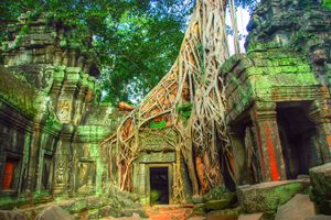 Tree roots growing over Angkor Wat temple ruins