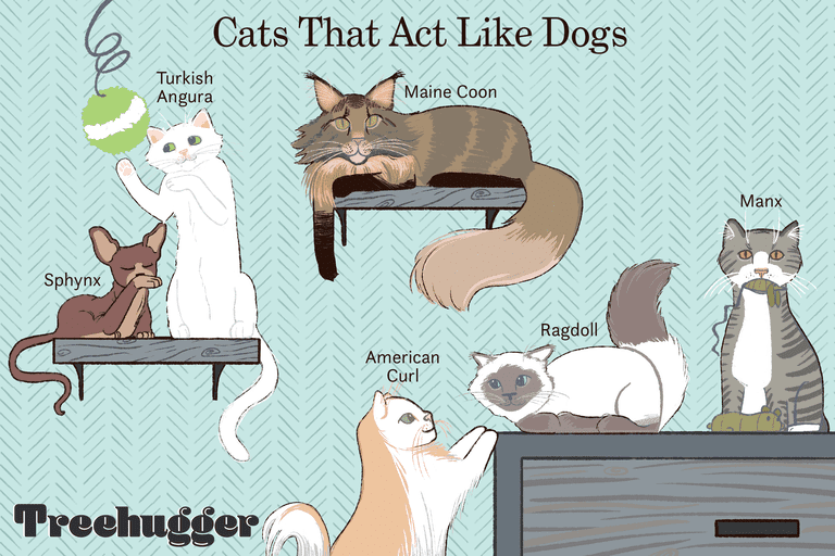 Cats that act like dogs illustration
