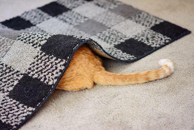 Cat hiding under a rug.