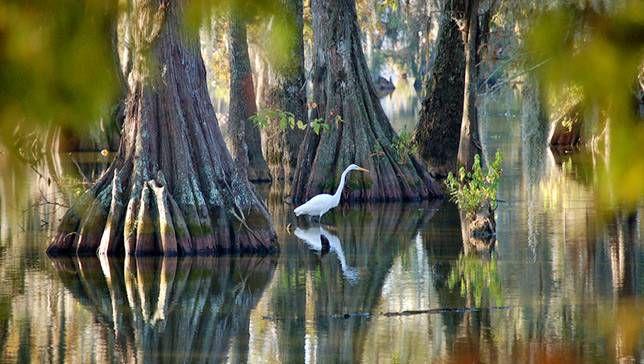 Olvídese de Bourbon Street: 7 maravillas naturales de Louisiana