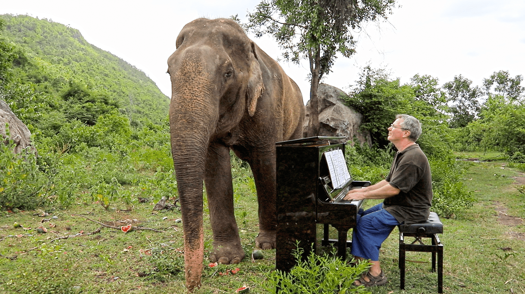 Bull elephant Romsai is enraptured with Barton's music.