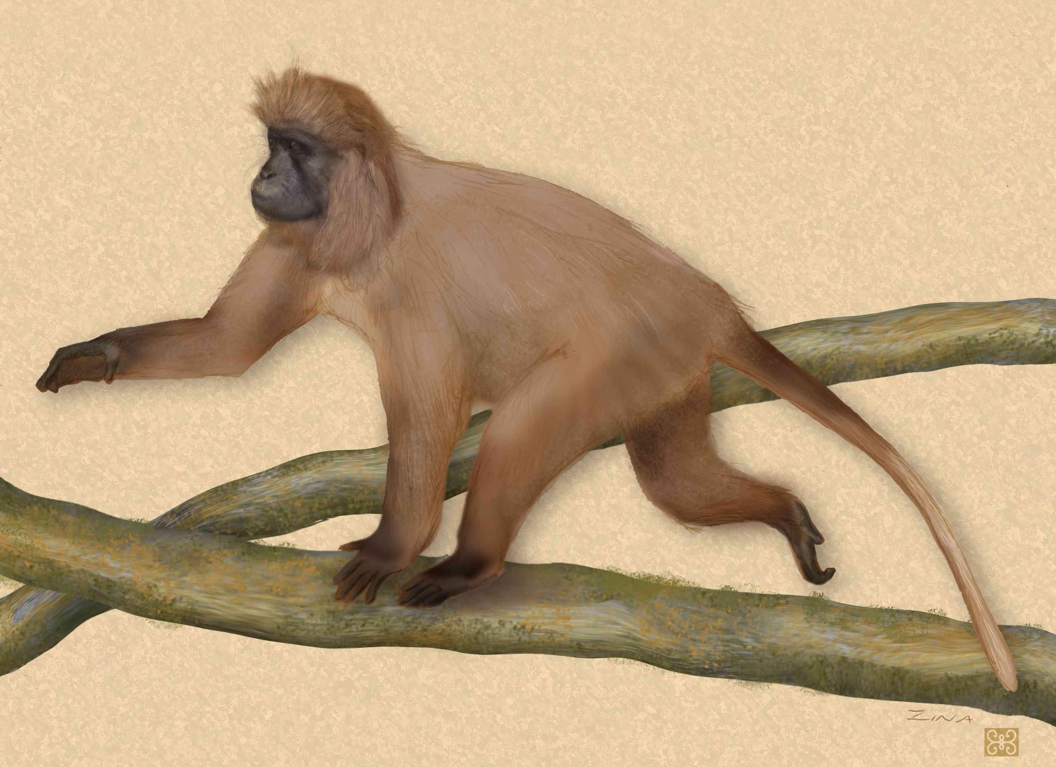 illustration of long haired kipunji monkey walking