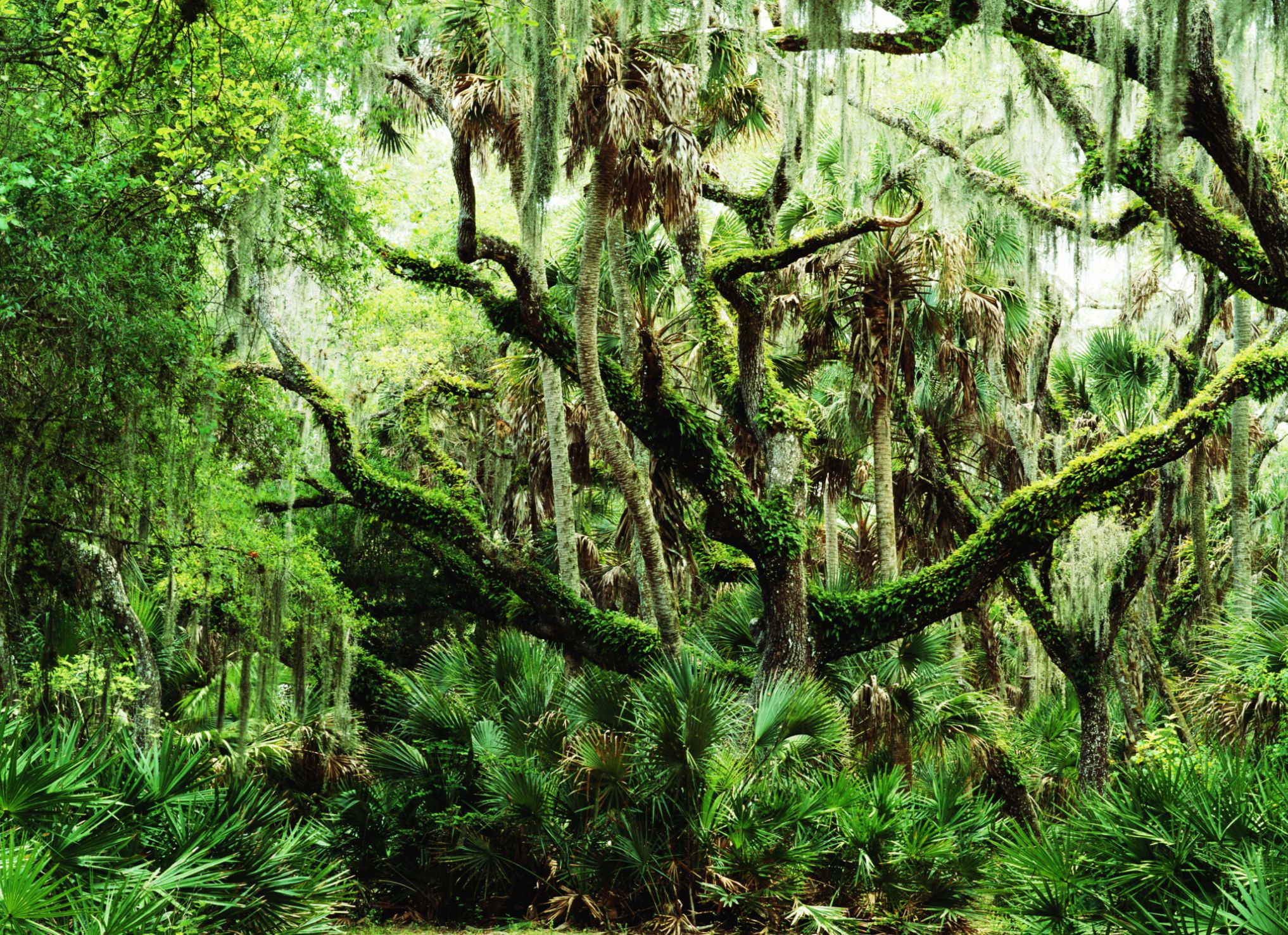 Ocala National Forest in Florida